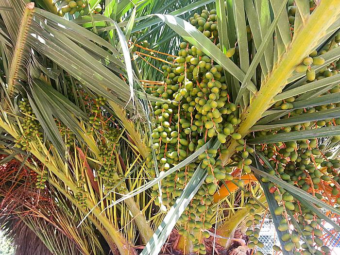 Dates at The Ecology Center - San Juan Capistrano, California