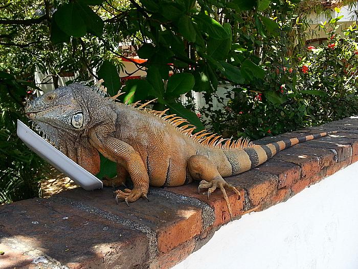 Iguana at Isla Cuale, Puerto Vallarta, Mexico