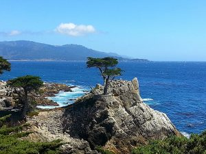The Lone Cypress - 17 Mile Drive - Pebble Beach, California