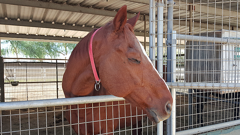California Equine Retirement Foundation - San Jacinto, California