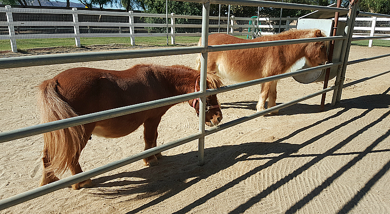 California Equine Retirement Foundation - San Jacinto, California