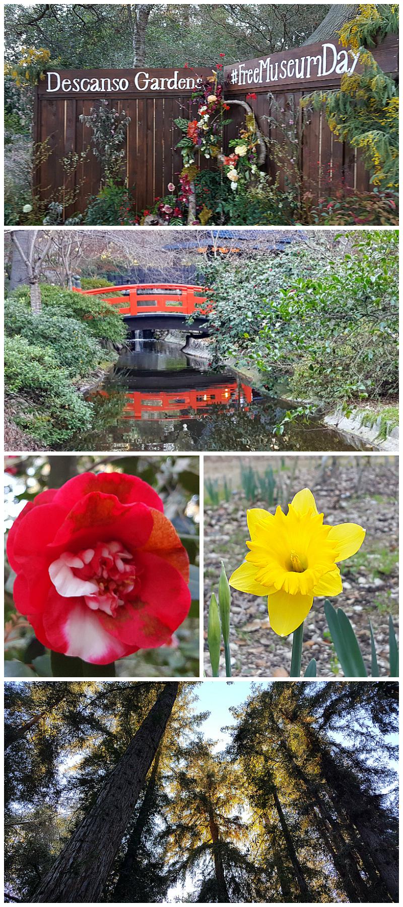 Descanso Gardens in La Canada Flintridge