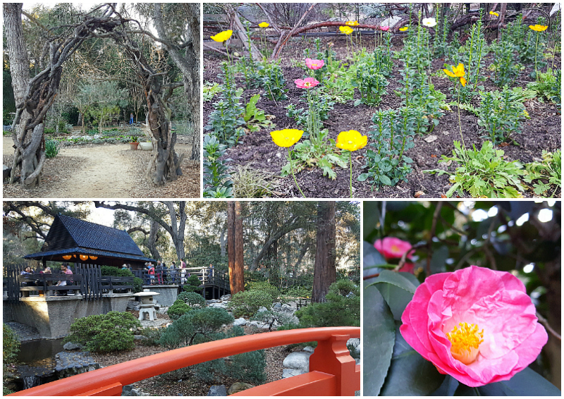 Descanso Gardens in La Canada Flintridge