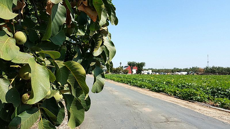 California Central Valley Farm Tour