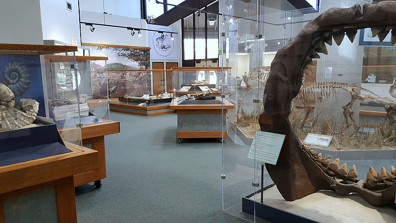 Clark Park Interpretive Center Free Orange County Museum Dinosaur Fossil