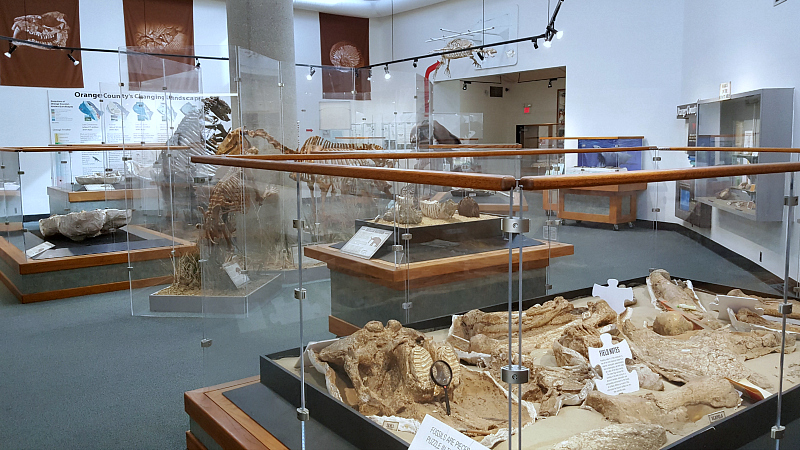 OC dinosaur fossils interpretive center