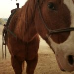 The Alisal Luxury Guest Ranch and Resort