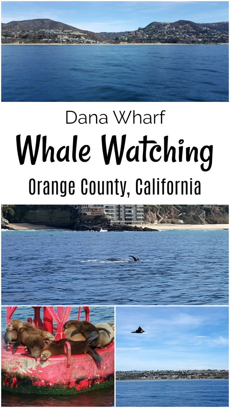 California OC Whale Watching Dana Wharf Orange County Dana Point