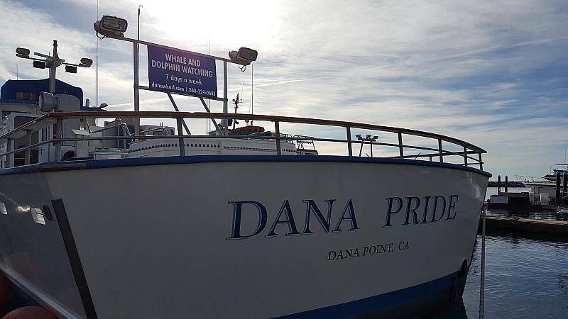 dana pride whale dolphin watching