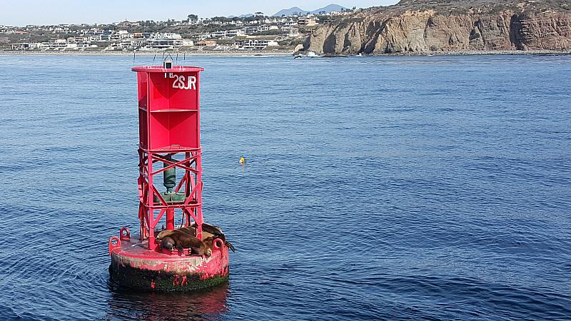 sea lions dana point harbor