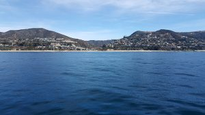 OC Whale Watching – Dana Point