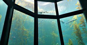 monterey aquarium kelp forest sharks