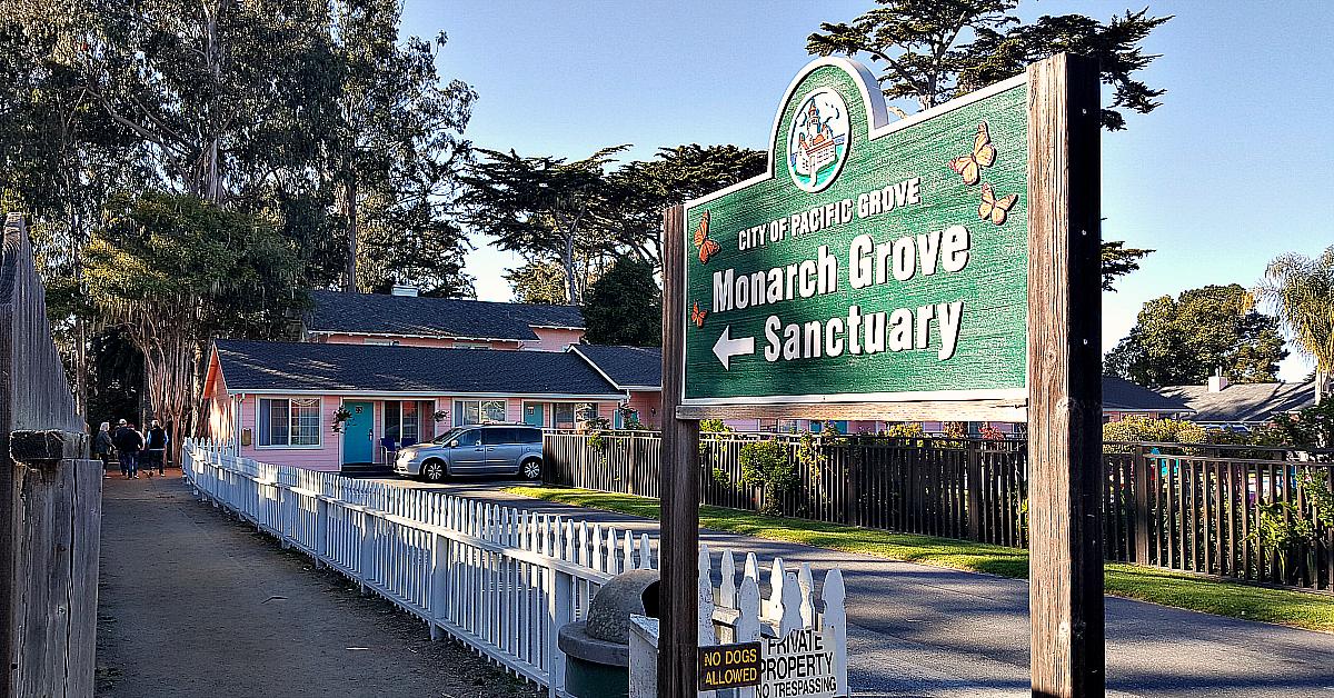 1 pg monarch grove