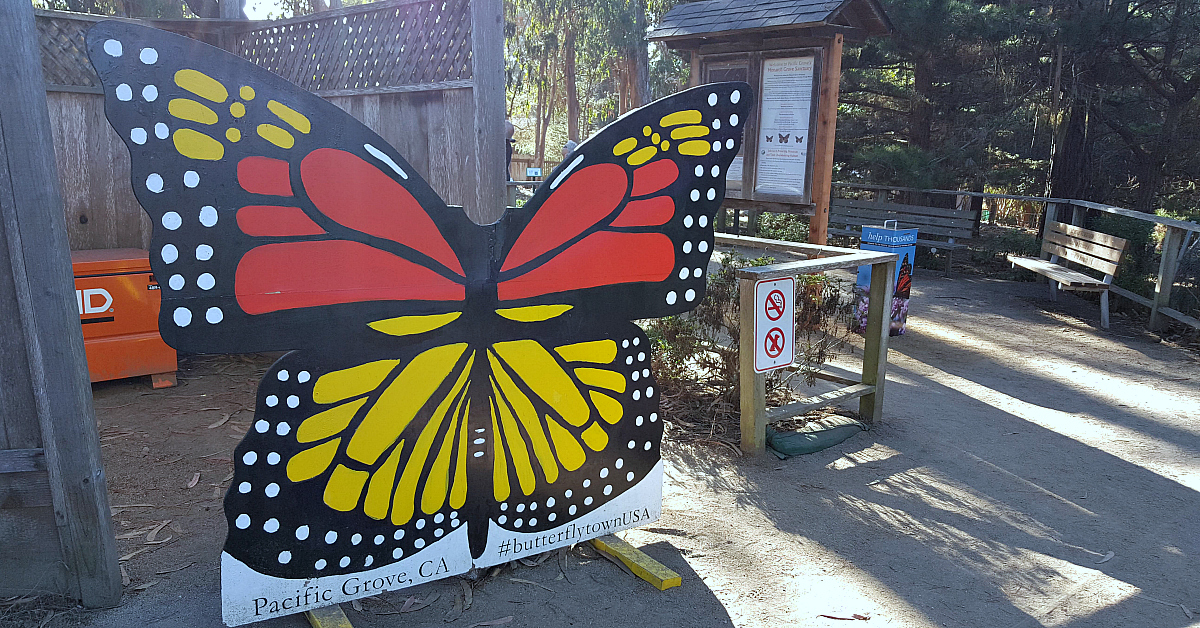 2 pg monarch grove