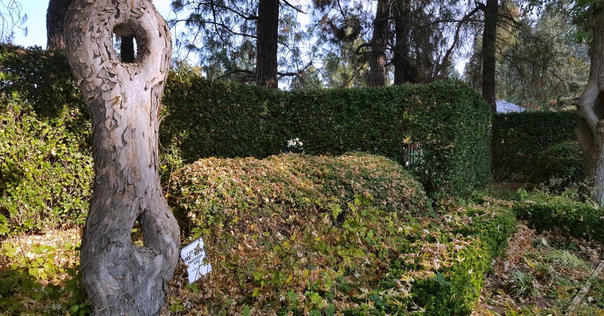 3 gilroy gardens tree