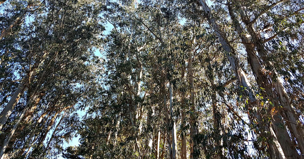 3 pg monarch grove