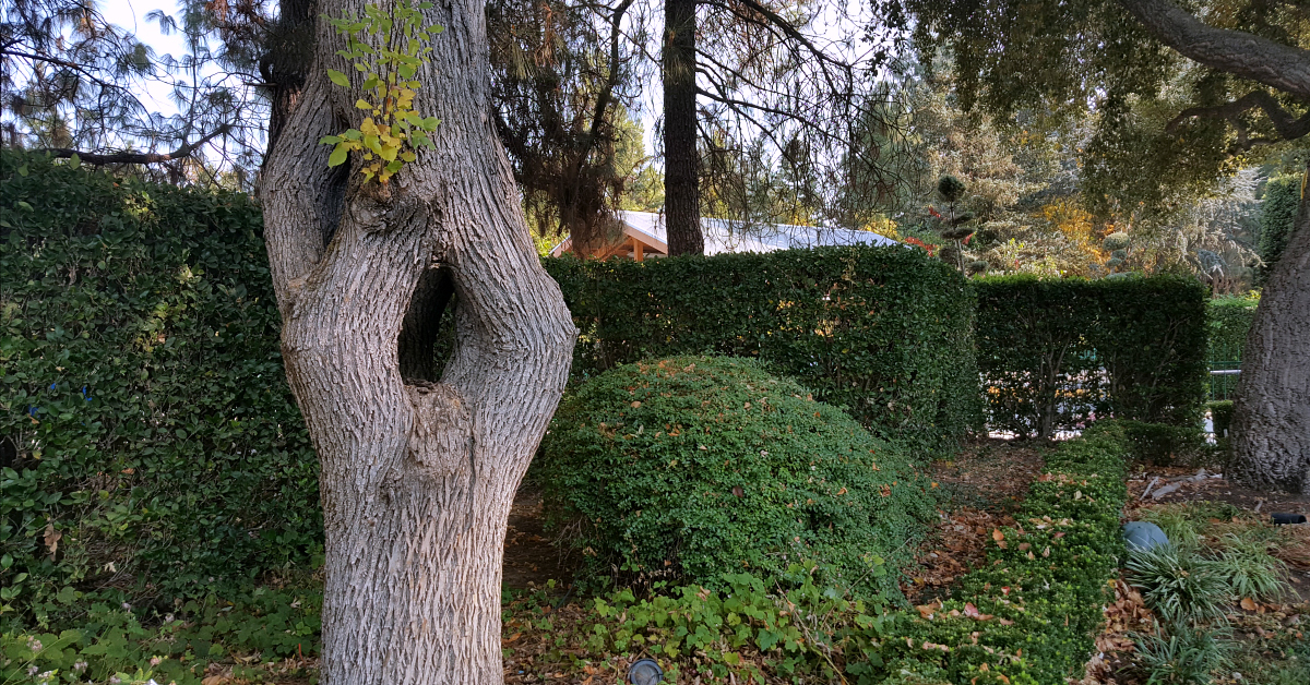 4 gilroy gardens tree