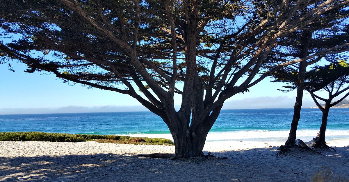 9 carmel beach