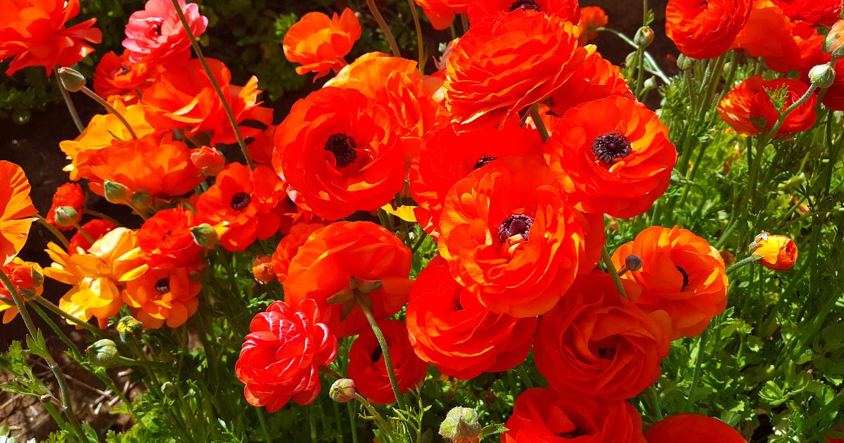 3 flower fields 20
