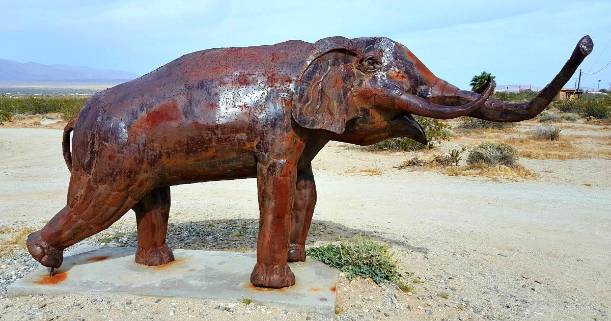 galleta meadows small elephant