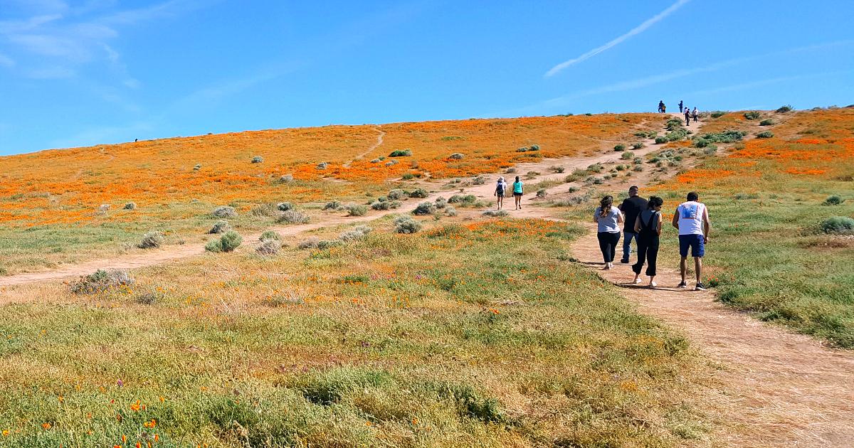 antelope valley poppy trail